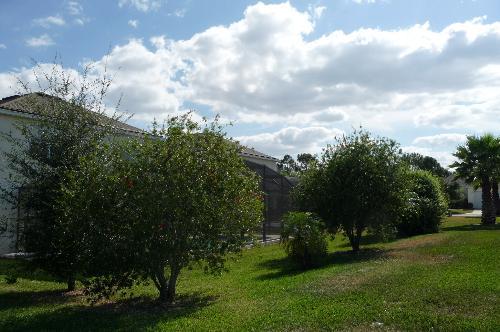 Established bushes for privacy