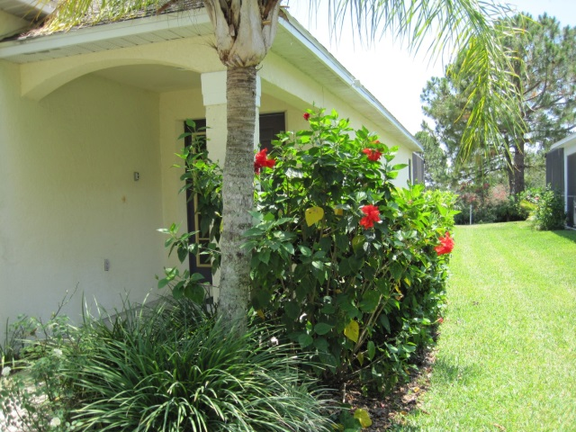 Front with hibiscus