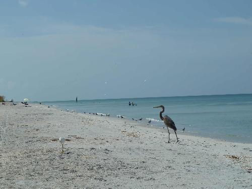 Busy beach Boca Grande