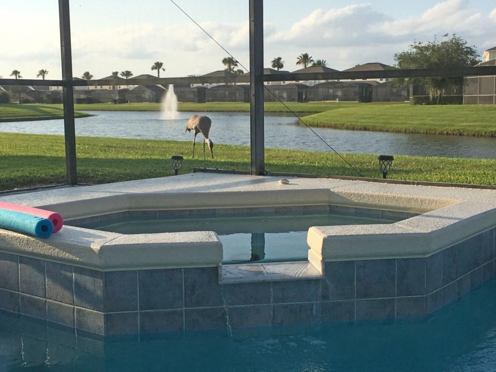 Spa-Lakeside-Fountain View